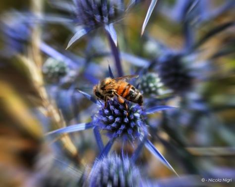 Colfiorito, Umbria, Italy , Bee by Nicola Nigri